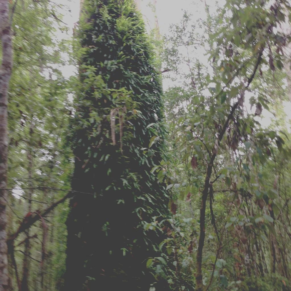 A Tree Finally Speaks